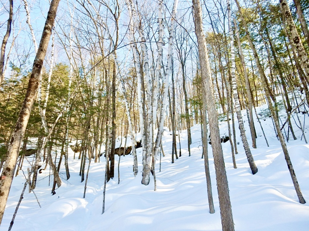 Belle balade hivernale  C8b43f10