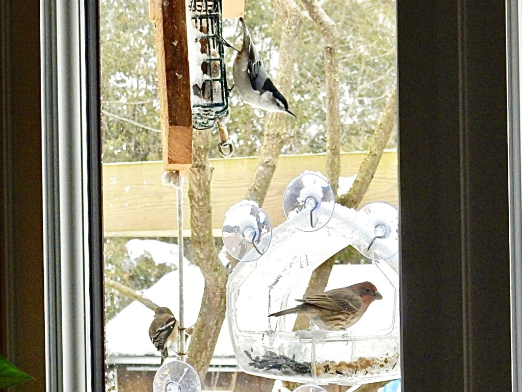 Mangeoire de fenêtre  D3233110
