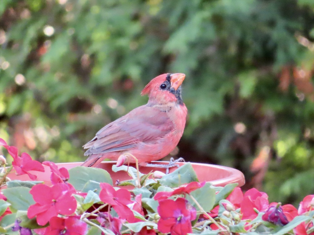 Cardinals Fc6b9310