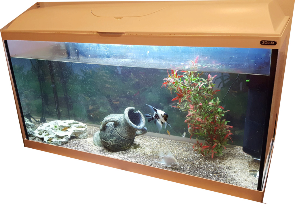 Kent1 : Nouveau en aquariophilie 20190210