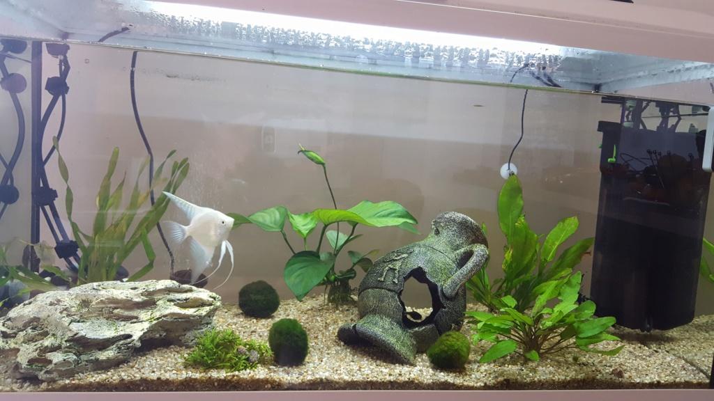 Kent1 : Nouveau en aquariophilie 20190310