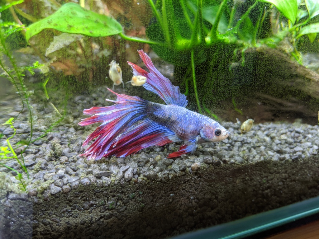 Betta en mauvaise forme Img_2019
