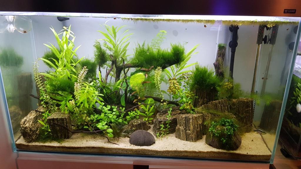 Petit Bac Fluviatiles Africains 20200110