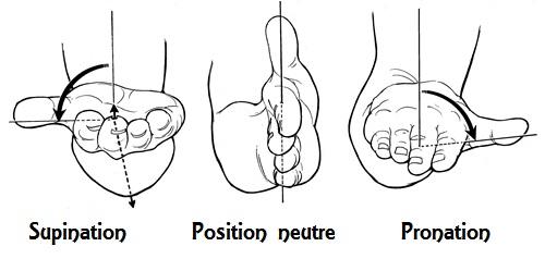 Pronation-supination: le grand oublié de la physiologie horlogère  Supina10
