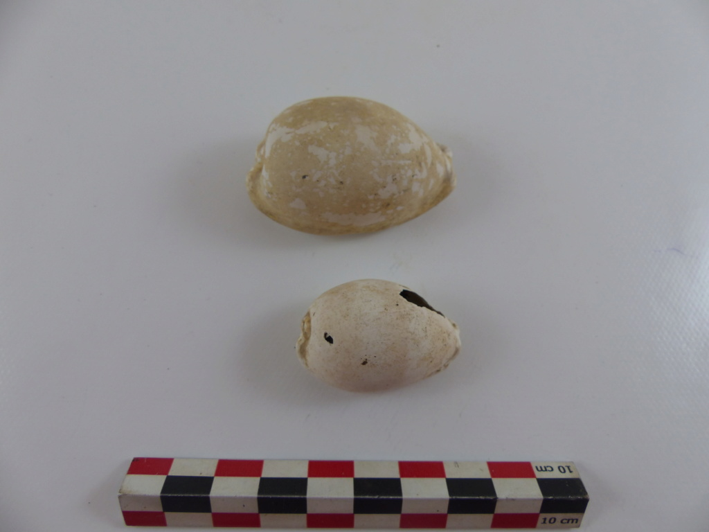 archéomalacologie... Luria lurida ? 2018_010