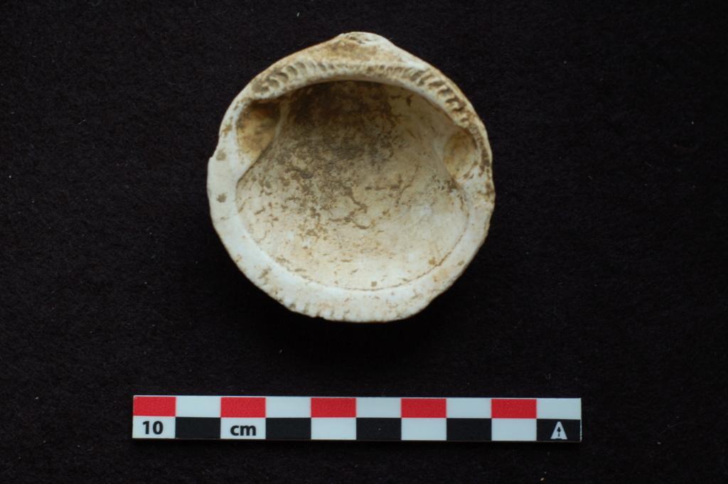 Glycymeris sp. fossile à identifier Dsc_0310