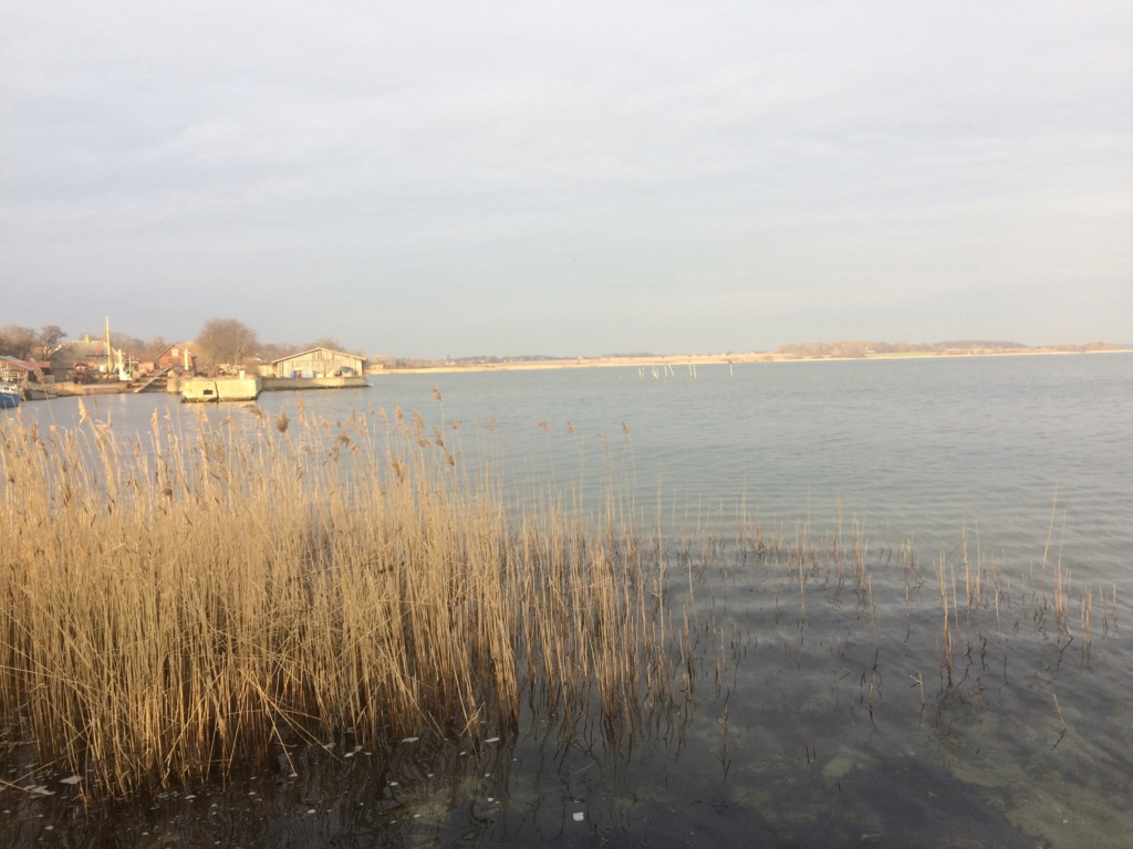 Pêche au brochet au Danemark Img_0811