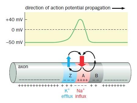 Biological computation: By evolution, or design?  Action10