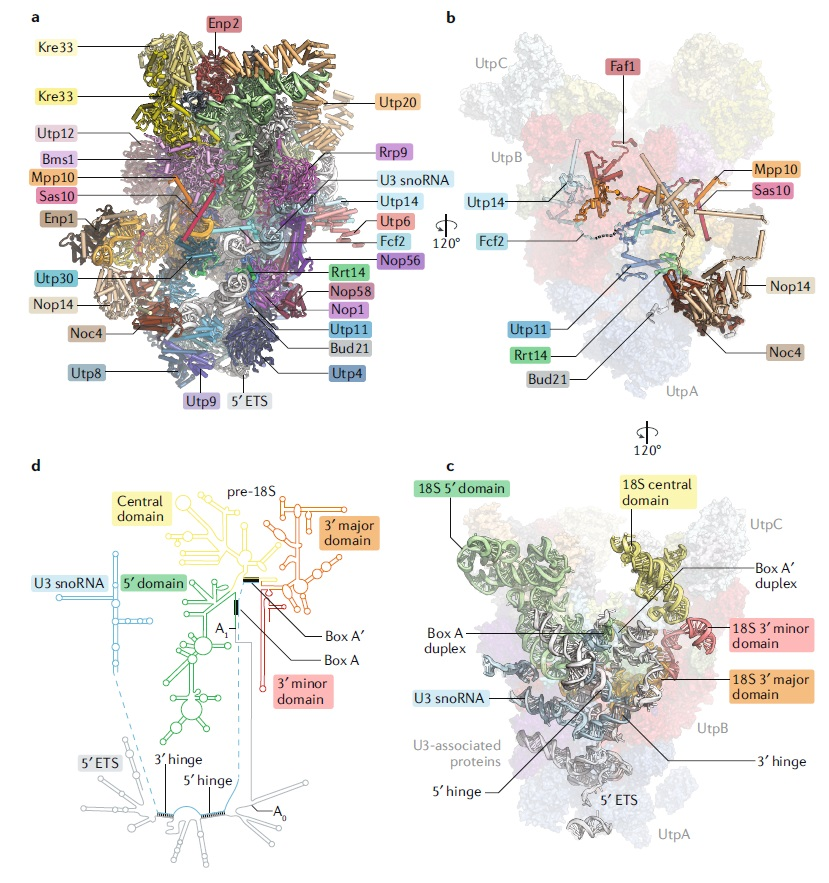 Translation through ribosomes,  amazing nano machines Cryo_e10