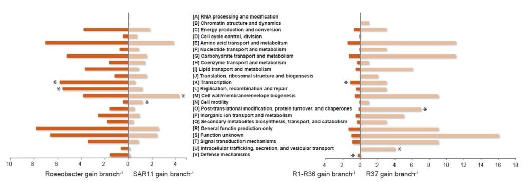 Pelagibacter Ubique is the best candidate to investigate Origin of life scenarios. Here is why Gene_f11