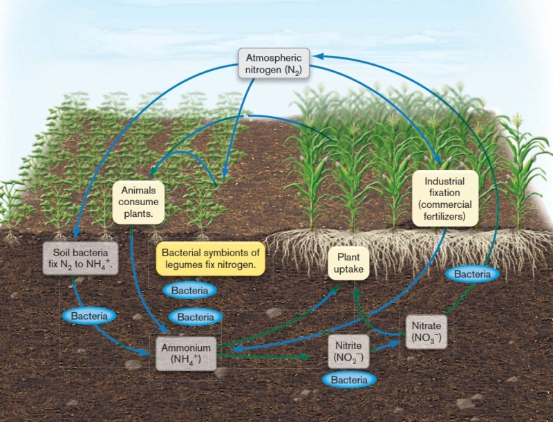 The nitrogen cycle, irreducible interdependence, and the origin of life Global10