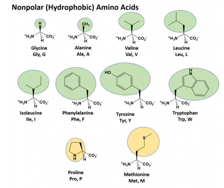 Amino Acids: Origin of the canonical twenty amino acids required for life Non-po10