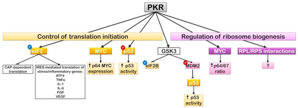 Translation through ribosomes,  amazing nano machines - Page 2 Pkr_re10
