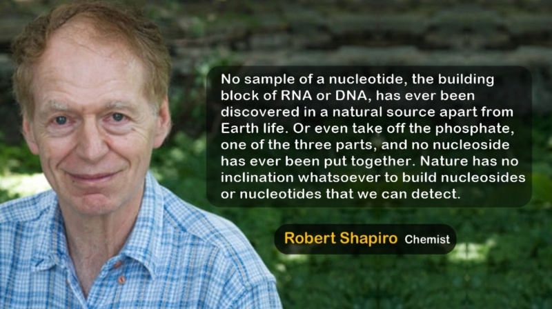 RNA & DNA: It's prebiotic synthesis: Impossible !!  Robert10
