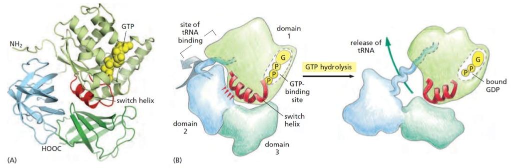 Translation through ribosomes,  amazing nano machines - Page 2 The_la10