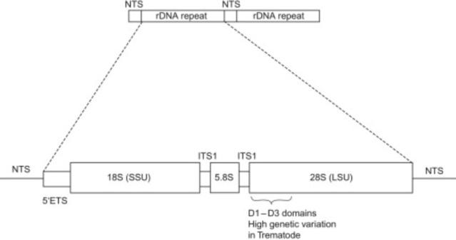Translation through ribosomes,  amazing nano machines - Page 2 The_ri11
