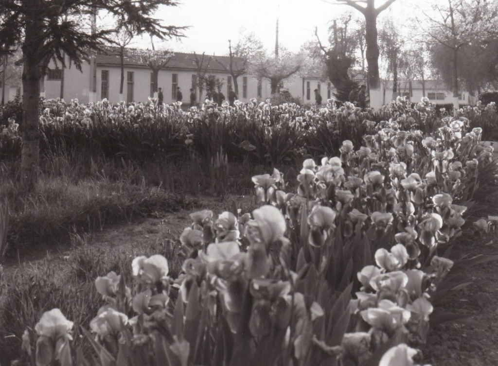 Entrée fleurie du Camp d'Idron, source d'éternels souvenirs.   Aamci_12