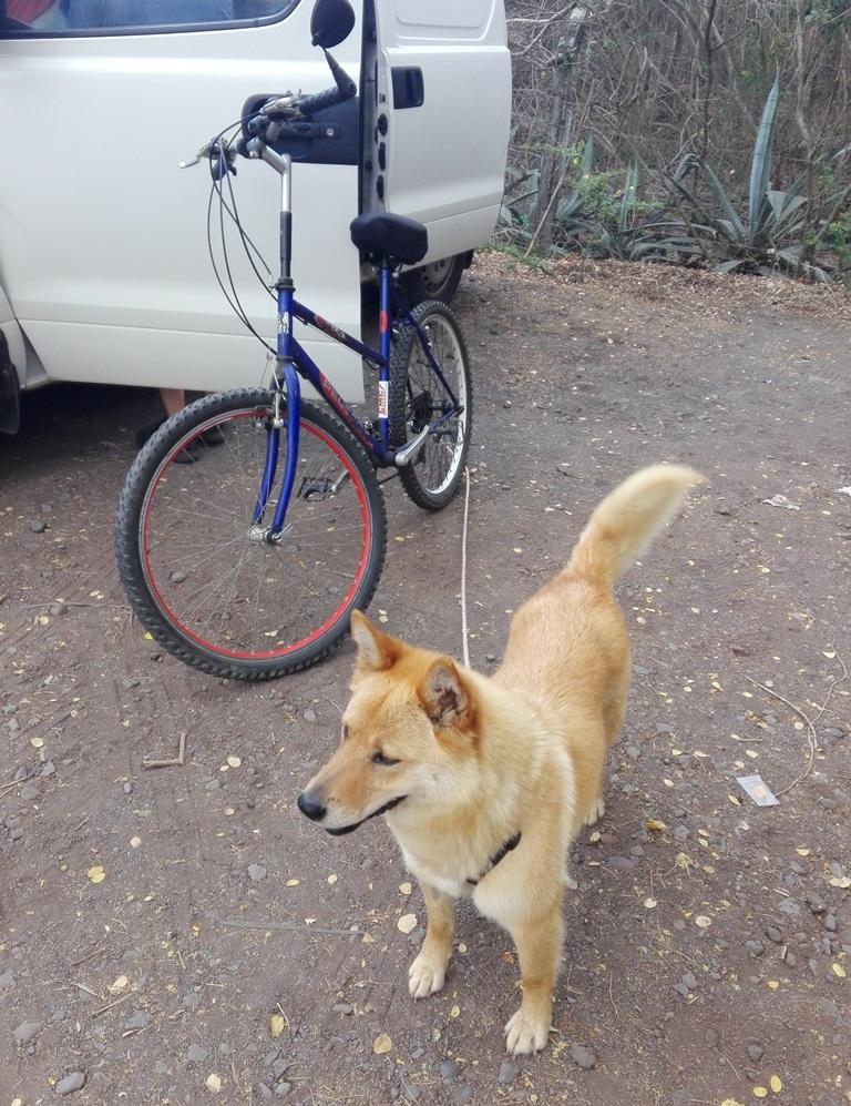 MANOOSH, chienne marron aux poils mi-longs de 6 ans environ pour 18 Kg - Marrainée par Pat84 Img_2032