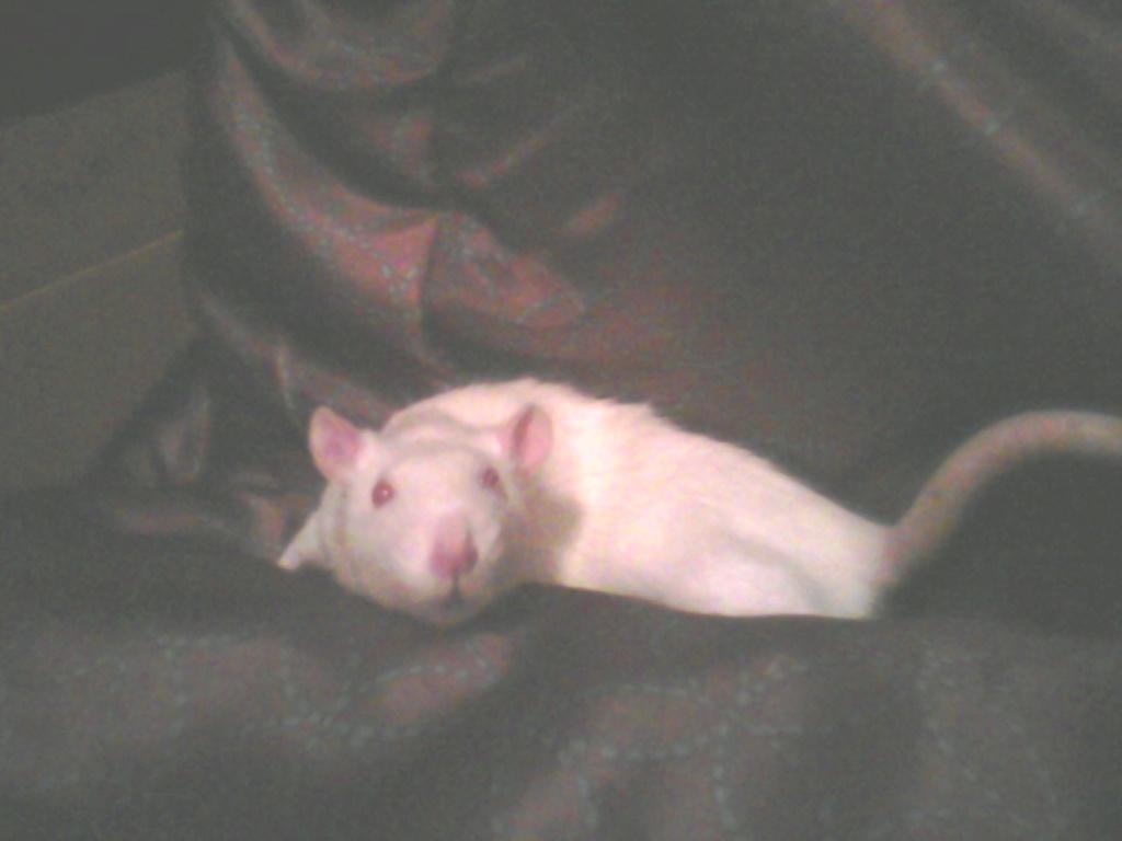 The Pet/Companion Thread  01141210