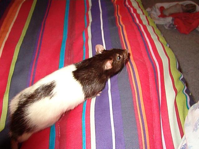 The Pet/Companion Thread  Jessic10