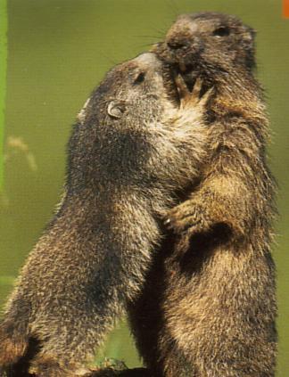 Salut, Moi c'est Nico Marmot11
