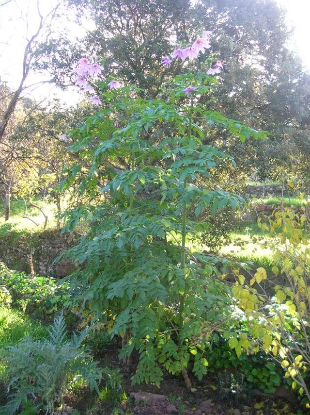 Connaissez vous cette plante? Dscn0011
