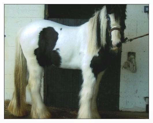 A vous de juger Horse310