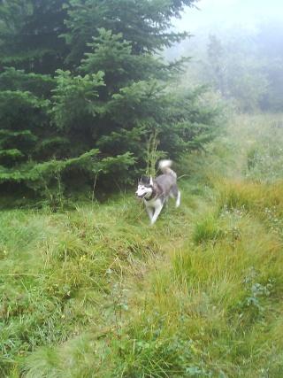 WEST, Husky mâle 3 ans  DECEDE - Page 5 Dsc00010