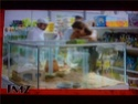 Angelina Jolie and Brad Pitt go Gerbil Shopping 00111