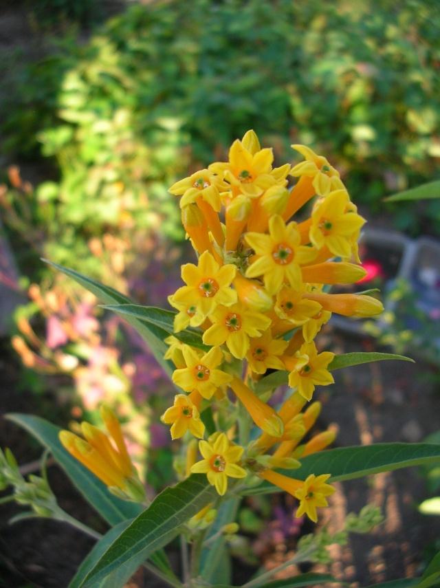 Quelques fleurs du moment Dscn9914