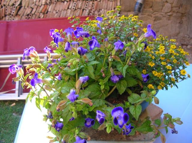 Quelques fleurs du moment Dscn9915
