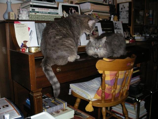 Deux frères chats ! 00629