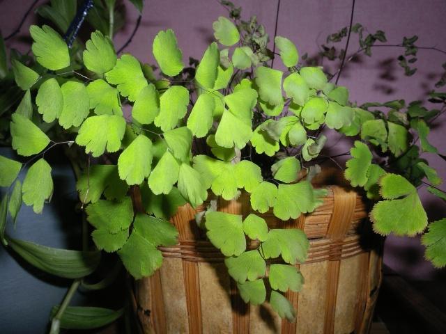 Du vert dans mon microcosmos... 01215