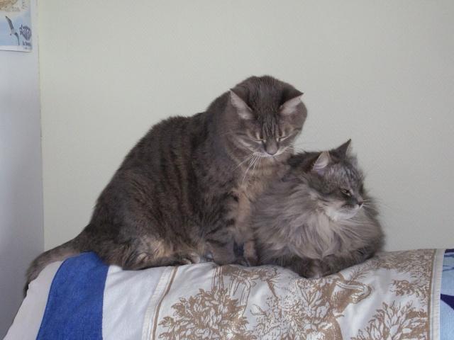 Deux frères chats ! 31410