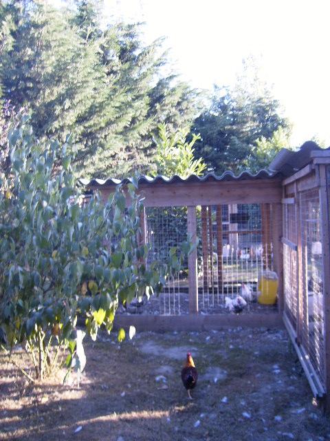 L'élevage de Mayeli Site_011