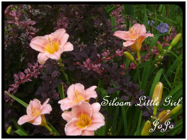 Siloam Little Girl Dsc07213