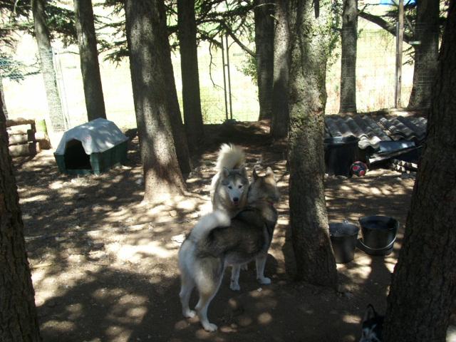 Les doudous à la recherche d'un  parrain / d'une marraine Youkie11