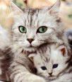 l'oeil du chat 13010