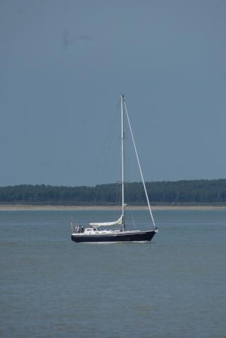 Petite semaine en Baie d'Authie Sud Dsc02115