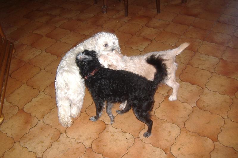SAMMY et POLLY papy et mamie à la SPA DE DOUAI 59 - SAUVES - - Page 3 Dscf4213
