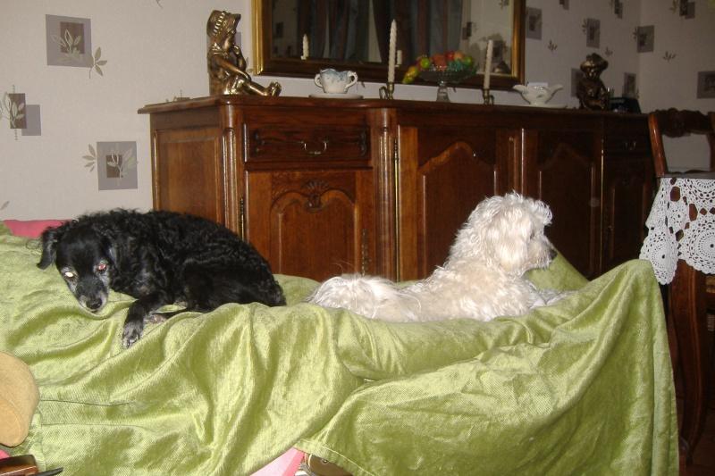 SAMMY et POLLY papy et mamie à la SPA DE DOUAI 59 - SAUVES - - Page 3 Dscf4214