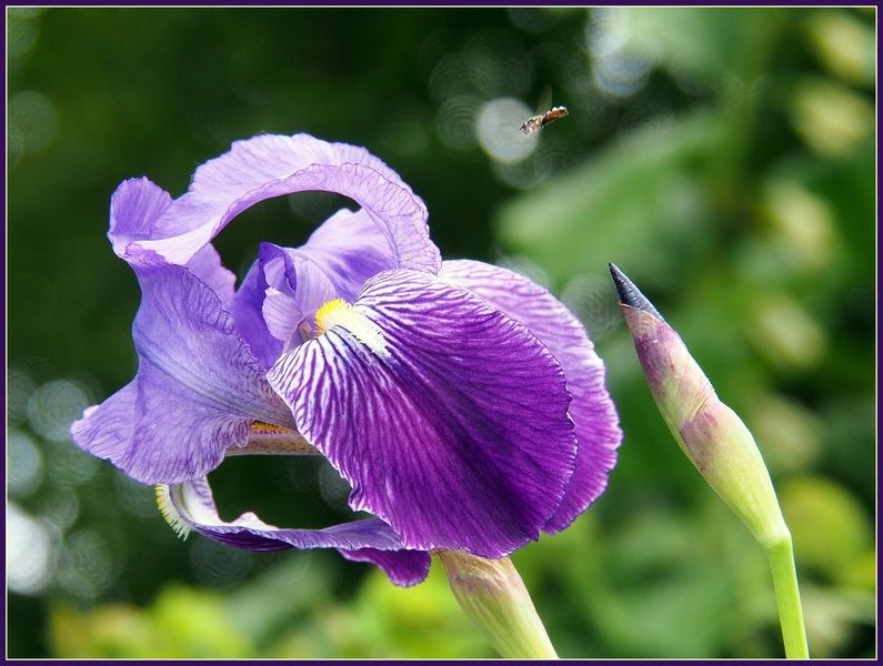 Enfin le printemps..... P6070011