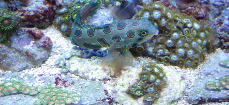 Photos boutures de Zoanthus (coraux mous) Imgp1420