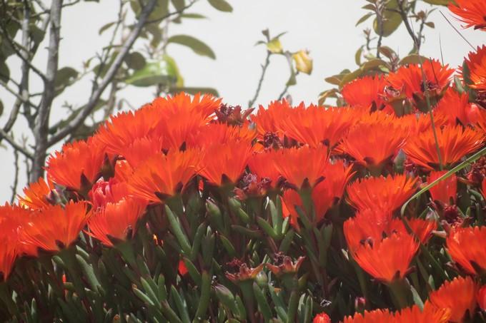 Fleurs - Fruits.......Bri - Page 10 Img_2810