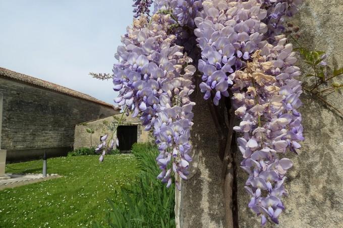 un dimanche de mai ,un beau petit village  pour un pique nique charentais Img_2933