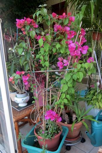 un clin d'oeil dans mon jardin  Img_2942