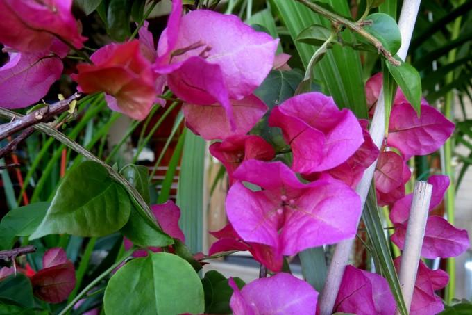 un clin d'oeil dans mon jardin  Img_2943