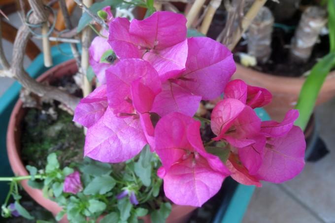 un clin d'oeil dans mon jardin  Img_2944