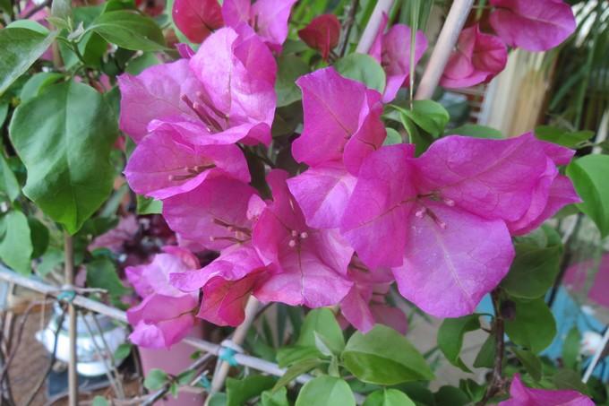 un clin d'oeil dans mon jardin  Img_2945
