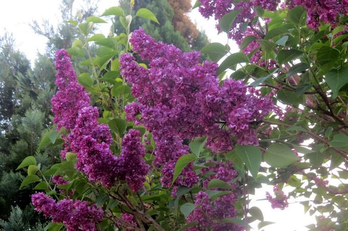 un clin d'oeil dans mon jardin  Img_2947